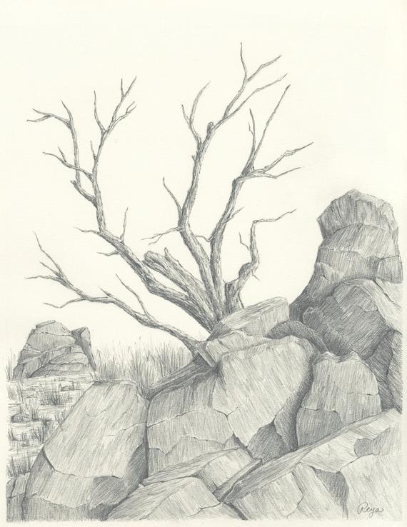 Arid Desert Tree and Boulders Pencil Drawing Original Pencil Drawing
