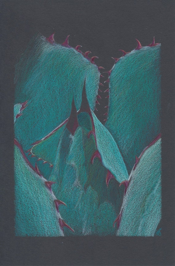 Blue Agave Original Colored Pencil Drawing 5x7