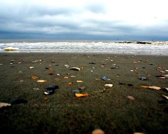 Seashells on the Seashore - Beach Nautical Photography Brown Grey Gray Blue Shells Fine Art Print Wall Decor Artwork - 8x10 Photograph