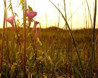 Waiting for the Sunrise - Sunset Field Dunes Photography Flower Pretty Fine Art Lustre Print - 8x10 Photograph