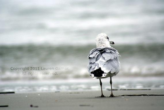 Watching the Tide Roll In - Seagull Gull Bird Nautical Beach Photography Home Decor Grey Gray Calm White Fine Art Print - 8x10 Photograph