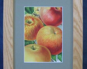 Farmhouse Style Vintage Botanical Apple Print Botanical Illustration Framed Fruit Antique Apple