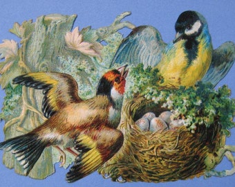 Bird Wall Decor Framed Bird Picture 1890's Vintage Bird Decor Rustic Home Bird Nest Eggs Victorian Scrap