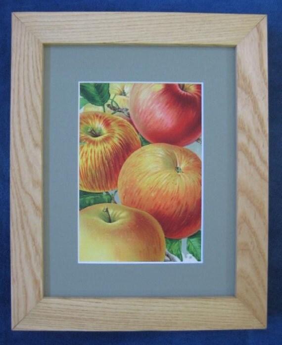 Vintage Botanical Apple Print Botanical Illustration Framed Fruit Antique Apple