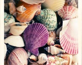 Bathroom Decor, Sea Shells Photograph, Nature Photography, Beach House Decor, Summer Home, Fine Art Print, Seashells