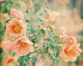 Flower Photography, Its Love 5x5 Print, Shabby Chic Photograph, Apricot Flowers, Pastel Peach Color, Summer Garden Photo