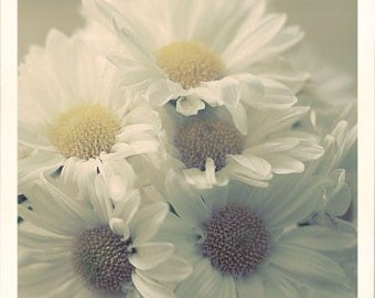 Daisy Photograph, Flowers, Photography, Still Life, Nature, Soft, Cream, Vintage Style, Shabby Chic
