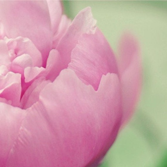 Pink, Flower Photograph, Peony, Fuchsia, Shabby Chic, Soft, Bedroom Art, Home Decor, Close Up, Petals, Macro