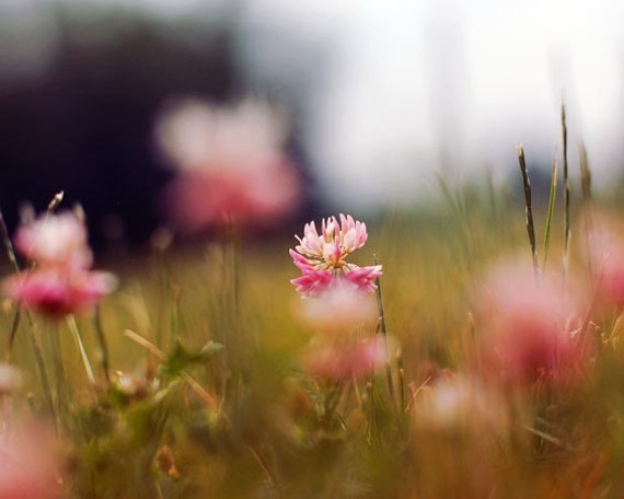 Nature Photography, Clover Photograph, Macro Flower Photo, Pink, Chartreuse, Spring Grass, Home Decor