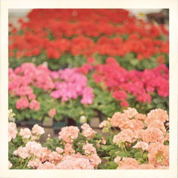 Flower Photograph, Nature Photography, Summer Flowers, Garden Art, Pink, Red Colors, Kitchen Decor, Retro Photo
