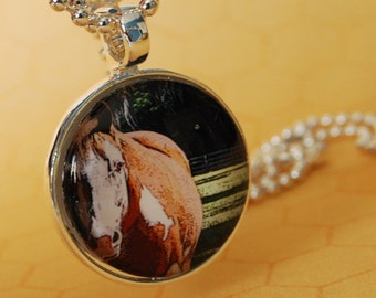 Domed Glass Tile Photo Pendant Necklace Horse AC115