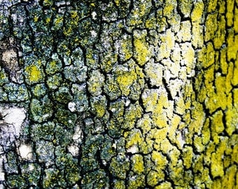 Clearance 50% OFF Sale Photograph of an Abstract Yellow and Green Spotted Tree Bark Trunk in Iran Nature Vertical Art Print Home Decor