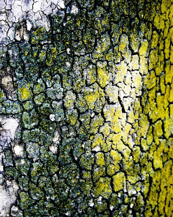 Photograph of an Abstract Yellow and Green Spotted Tree Bark Trunk Detail in Iran Botanical Nature Vertical Art Print Home Decor