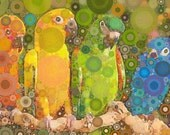 Pop  Art, Abstract, Photo, Tropical Birds