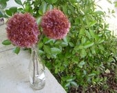 2 Plummy Yarn Pom Pom Flowers With Natrural Twig Stem