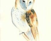 BARN OWL by DIMDIart Original watercolour painting 8x10inch