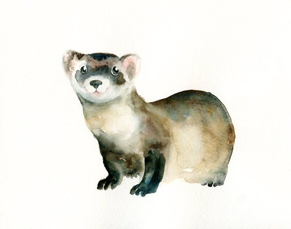 a study of the black footed ferret Black-footed ferrets at the national black-footed ferret conservation  store and study these  critically endangered ferrets reproduced using 20-year.