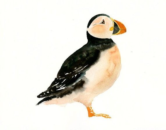 PUFFIN Original watercolor painting 10X8inch