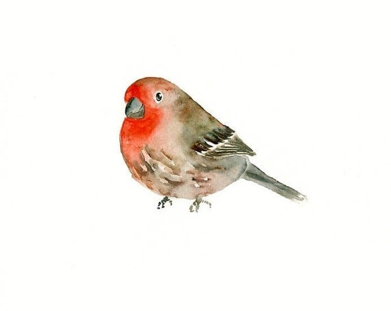 red HOUSE FINCH by DIMDI  Original watercolor painting 10X8inch