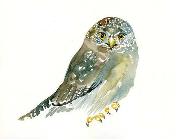 Northern Pygmy owl Original watercolor painting 10X8inch
