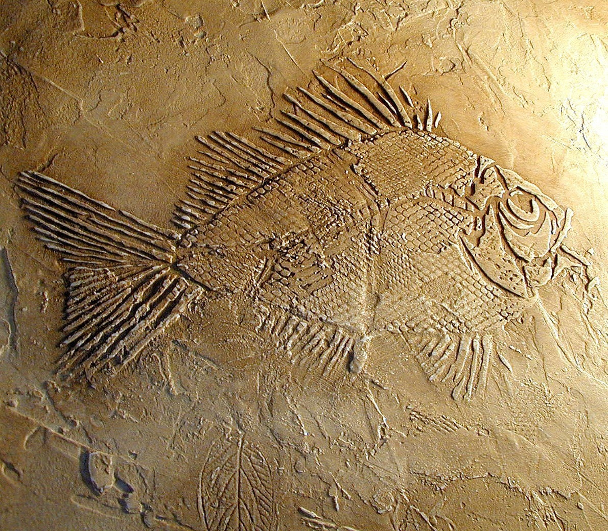 Prehistoric Large Fish Fossil Stencil By Cuttingedgestencils