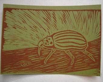 Striped Beetle Postcard