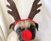 RUDOLPH the red nosed dog or cat CHRISTMAS ANTLERS - Holiday Party Attire