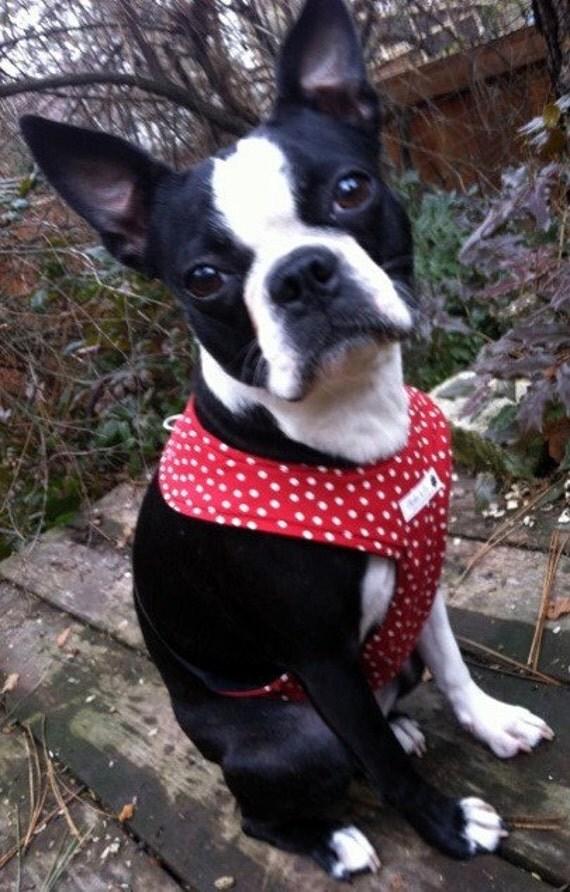 Comfort Soft  Dog Walking Harness- Dark Red Polka Dot