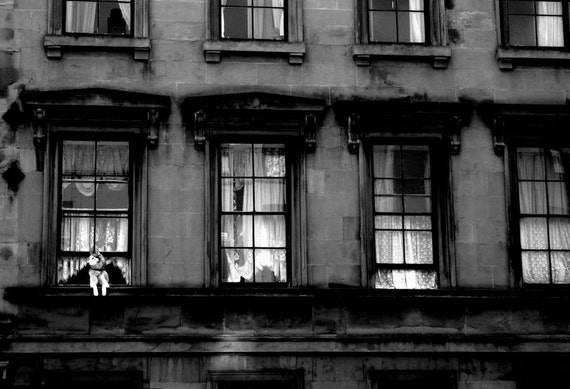 Fine Art photographic print of a dog looking out of a Glasgow Tenement window