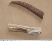 One Jumbo Size Whole Elk Antler Dog Chew