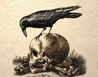 Crow On A Skull Gothic Macabre Art Print Medieval Memento Mori