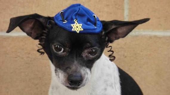 Hanukkah hat for dog or cat