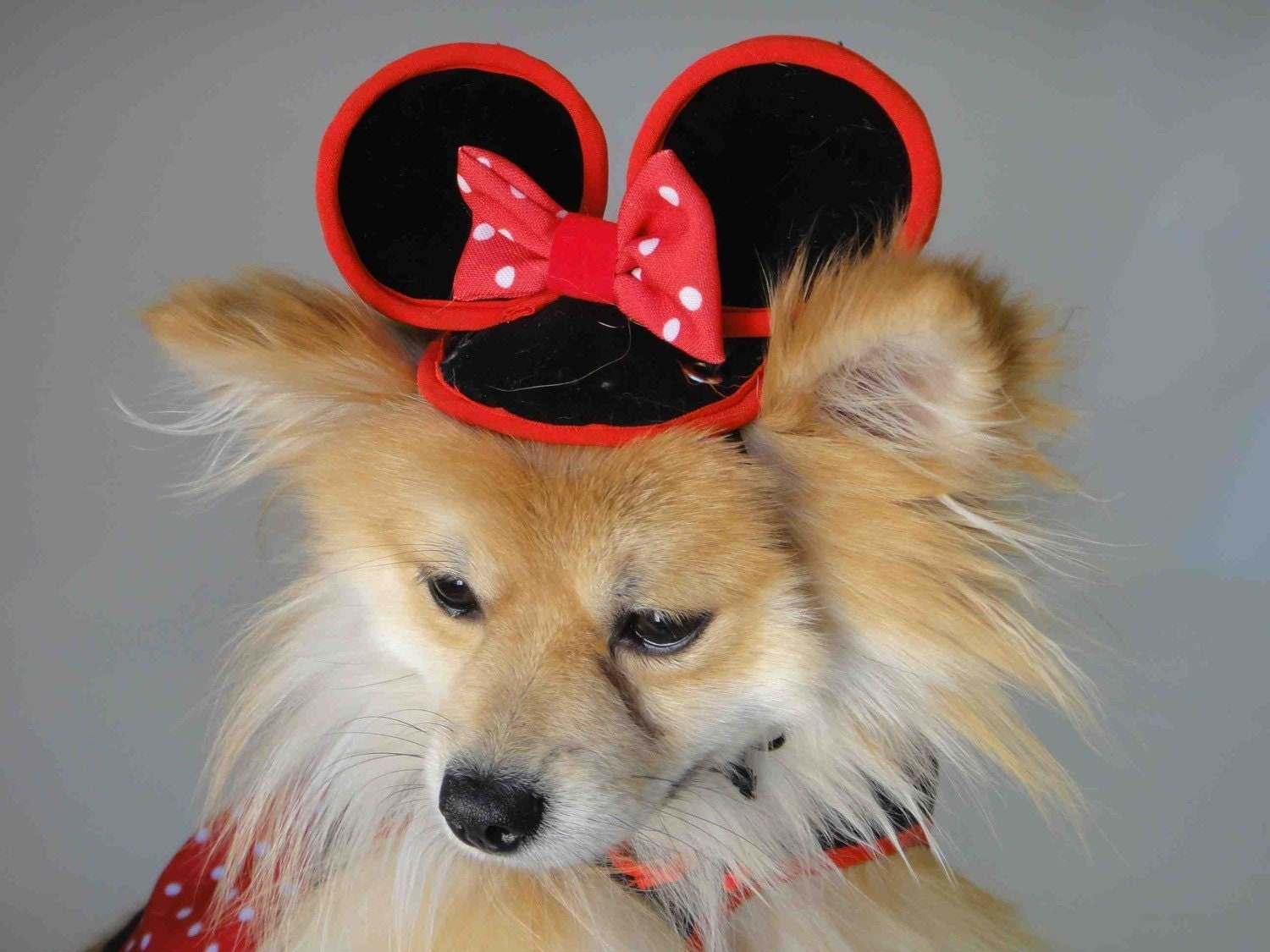 mini mouse costume for your puppy. Black Bedroom Furniture Sets. Home Design Ideas