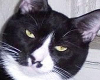 Card- Romantic Cat