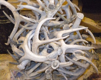 Bulk Lot of White, Weathered Deer Antler - 10 pounds - Whitetail and Mule