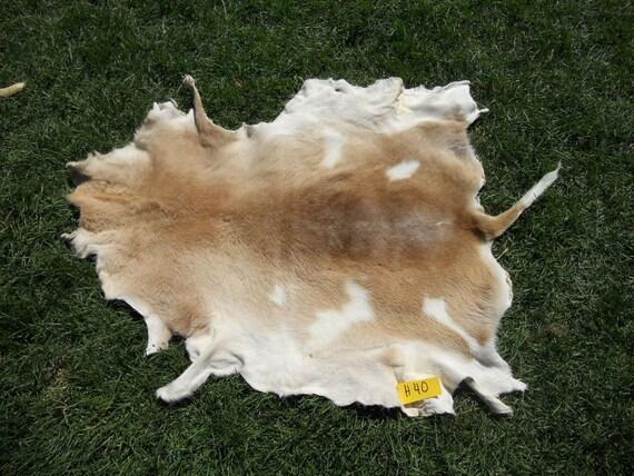 Tan and White Sheepskin- Summer Katahdin Hair Sheep Hide- Lot No. H40