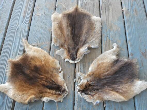 Muskrat Fur Pelt - One Full skin