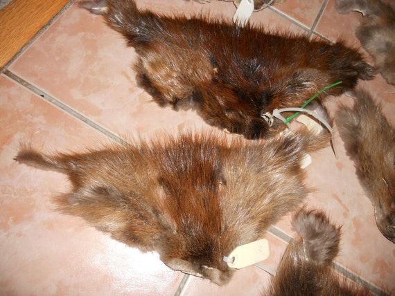 Salvaged Beaver Face or Mask- Real Fur- 1 Face- Stock No. ABVF