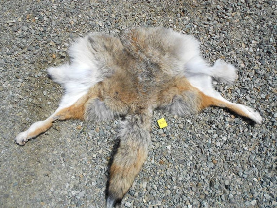 Soft Tanned Coyote Hide Piece- Backskin with Tail and Feet Lot No K10