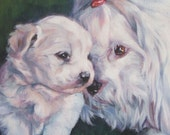 Coton de Tulear dog art CANVAS print of LA Shepard painting 8x8 portrait