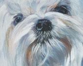 MALTESE dog portrait canvas PRINT of LAShepard painting 8x8 dog art
