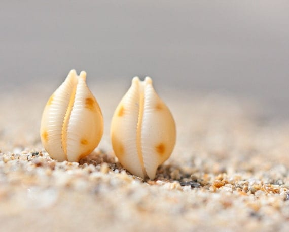 Sea Shell Stud Earrings Sterling Silver Yellow Orange white beach fashion aqua marine nautical vacation