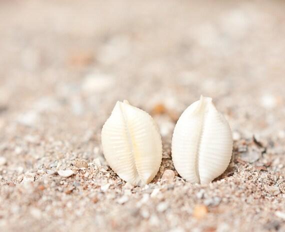 Sea Shell Stud Earrings Sterling Silver Cream Beige ivory white beach fashion aqua marine nautical vacation tbteam