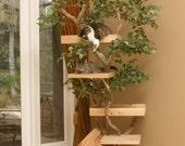 Mature (large) Cat Tree House