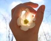 Picked Flower