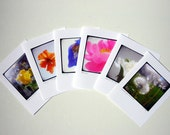 Set of Six Notecards - Spring Color