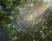Ray of Sunlight, 5x7 photograph