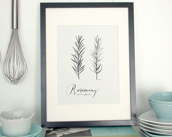 Rosemary 8.5x11 -Culinary Art- Collection