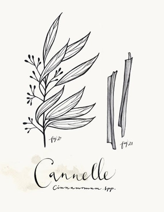 Cannelle 8.5x11 Collection -Art culinaire-