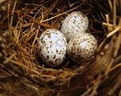 On Sale - Bird's Nest Journal